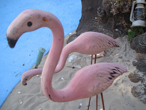 flamingos_3230