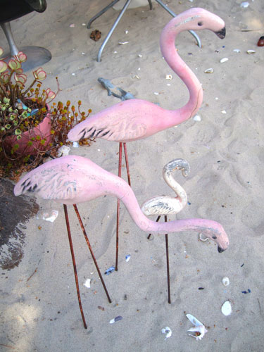 flamingos_3234