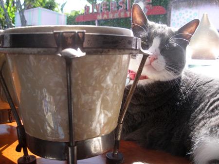 bongos-pearlized-white-nib_6769