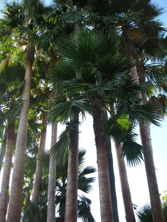 palms_2701