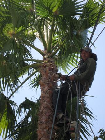 palms_4275