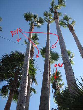 palms_4300