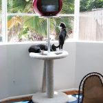 allee willis art furniture cat tv stand 2003