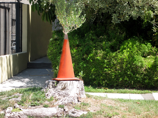 tree-growing-outta-traffic-cone_4285