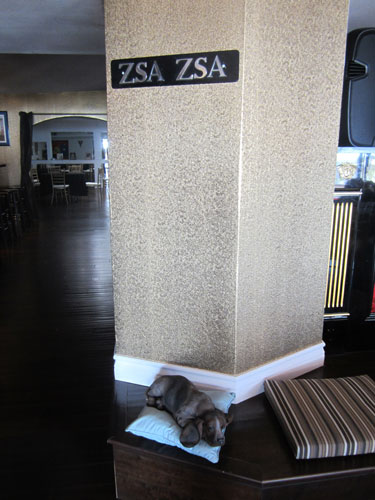 One Bedroom Pet Friendly Apartments
